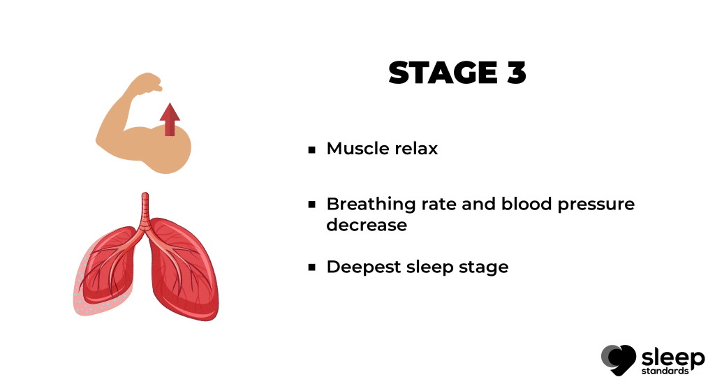 Stages of sleep   Bullet points explain stage 3 in stage of sleep