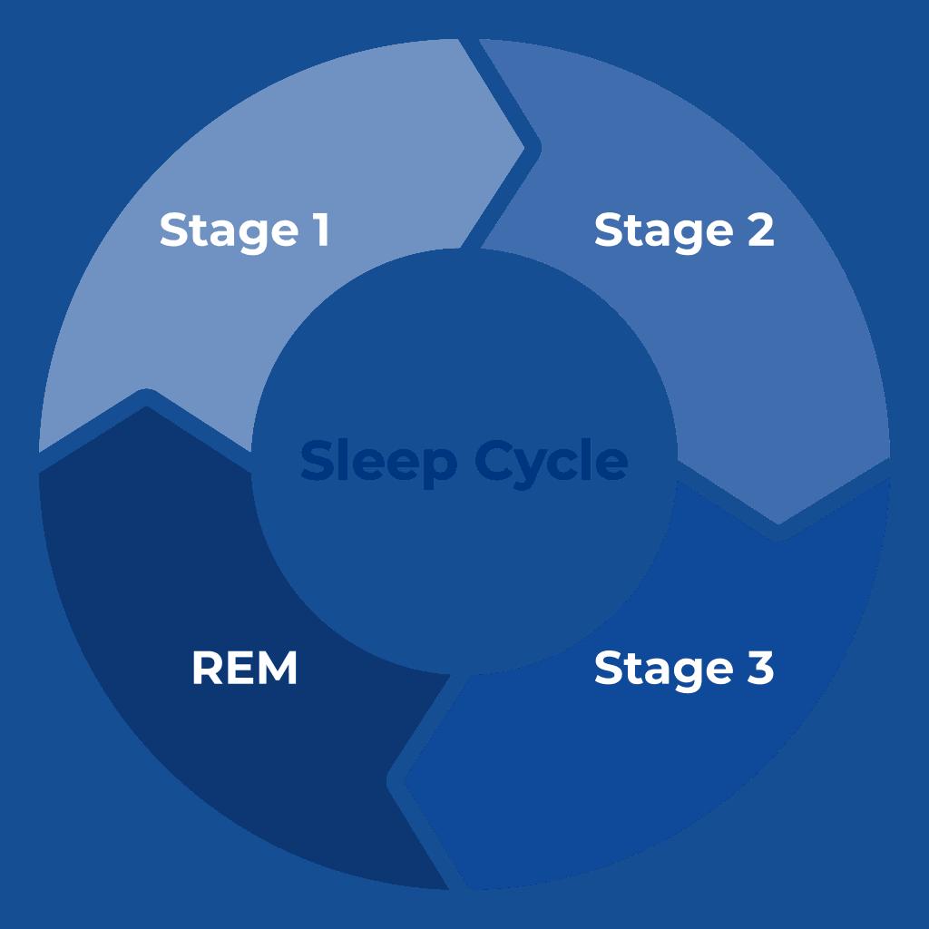 Sleep Cycle   Sleep Standards